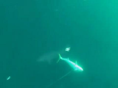 2 Metrelik Zıpkınla Balık Avı Videosu