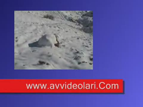 Karda Tavşan Avı
