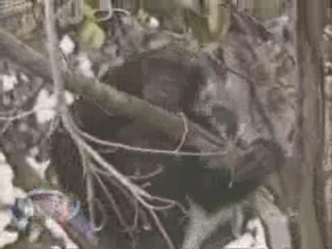 Maymunların Dünyası