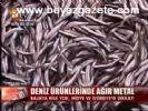 Balıklar Kanser Riski Taşıyor