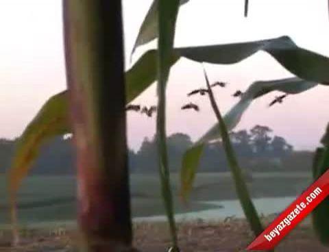 Kaz Avı - Kuş Avı Videoları