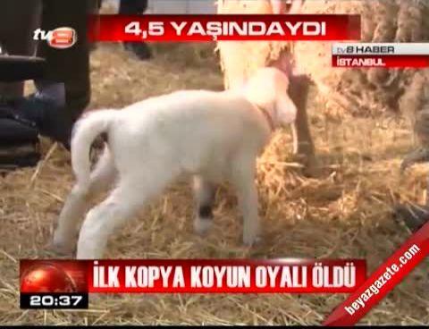 20120418 İlk Kopya Koyun ...