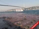 İstanbul Boğaz'ı Yine Kan Gölüne Döndü