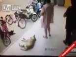 Köpeğe Tekme Atınca Bakın Ne Oldu  online video izle