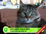 Herkesin Konuştuğu 'Şaşı Kedi Gli'