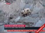Dağ Keçileri Böyle Kavga Etti  online video izle