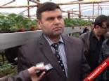 Türkiye'de İlk Kez İnegöl'de Marşlı Sistemle Çilek Üretimi Yapılıyor