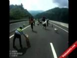 Polis Otoyolda Domuz Kovaladı