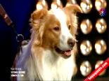 Yetenek Sizsiniz Türkiye Gizem Ve Lobonun Performansı