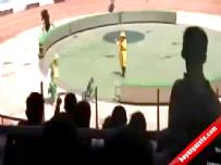Sirk gösterisinde ayı maymunu parçaladı!