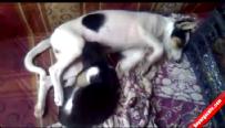 Köpek kediyi böyle emziriyor