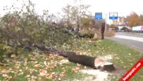 Yalova'da 180 ağaç kesildi