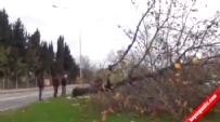 CHP'li Yalova Belediyesi'nin Kestiği Ağaçlar Fakirlere Yakacak Olacak