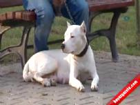 Parkta Pitbull köpeği saldırısı