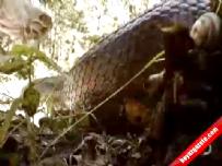 Çılgın adam kendini anakondaya yem yaptı