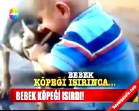 Bebek Köpeğin Kulağını Isırdı!