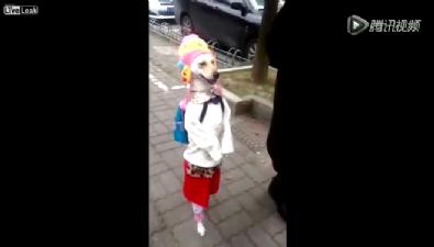 Bu köpeği görenlerin ağzı açık kalıyor