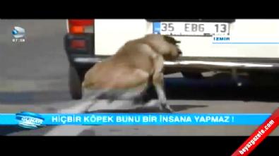 İzmir'de Köpeğe Yapılan İşkence Pes Dedirtti!