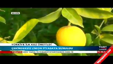 Çekirdeksiz portakal ve mandalinadan sonra limon üretildi