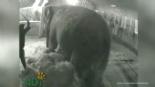 Sirk ve Benzeri Yerlerde Hayvanları Eğitme Adı Altında Para İçin Yapılan İşkenceler online video izle