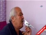 Muhabbet Kuşuna Tayyip Başbakan Sözünü Öğretti  online video izle