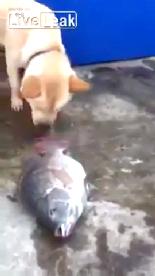 Altın Kalpli Köpek  online video izle