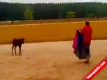 Matadoru Yerle Bir Eden Yavru Boğa  online video izle