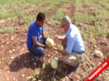 Su yerine koyunlar doldurdu  online video izle