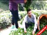 Çay fiyatlarını böyle protesto etti  online video izle