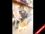Tutuklanan Köpek Serbest Bırakıldı