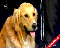 Yetenek Sizsiniz Türkiye - Savaş ve Köpek Vogi 1.Tur Performansı (14 Eylül 2014)  online video izle