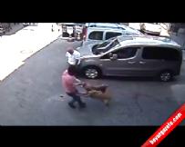 Bursa'da Pitbull Dehşeti Güvenlik Kamerasında  online video izle
