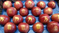 Logolu Elma Yetiştirdiler