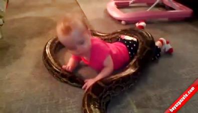 Minik bebeğin yılanla tehlikeli oyunu