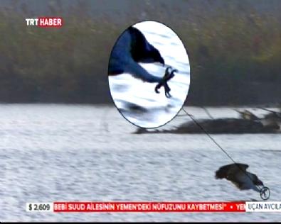 Balık Kartalı Avını Böyle Yakaladı!