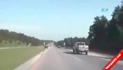 Yola çıkan ayıya araba çarptı