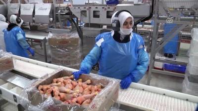 Hazır gıdaya talebin artması işletmeleri yeni yatırımlara yöneltti - SAKARYA